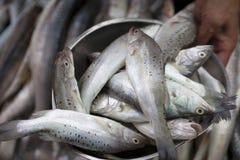 Vente des poissons Photographie stock libre de droits