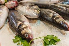 Vente du poisson frais, poissons sur la glace sur la fin de compteur  Images stock