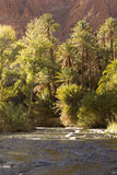 Venti del fiume fra l'oasi Fotografie Stock Libere da Diritti