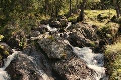 Venti del flusso di estate attraverso i terreni boscosi ed i pascoli Fotografia Stock