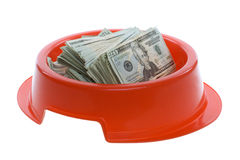Venti fatture del dollaro in ciotola rossa dell'alimento di cane Fotografia Stock Libera da Diritti