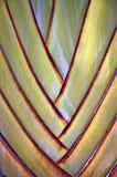 Ventilador de la palma Fotografía de archivo
