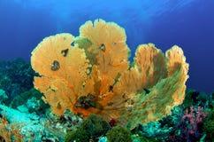 Ventilador de mar foto de archivo