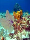 Ventilador e esponja de mar em um recife do console do caimão Foto de Stock Royalty Free