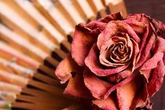 Ventilador secado de la rosa y del papel Imágenes de archivo libres de regalías