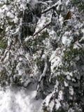 Ventiladores de neve Fotos de Stock