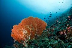 Ventilator för rött hav Arkivfoto