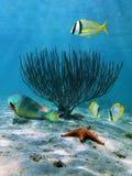 Ventilatore di mare e stelle marine immagini stock libere da diritti