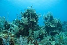 Ventilatori di mare e della scogliera Fotografie Stock Libere da Diritti
