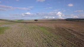 Ventile la visión HD, plantando el campo, Holm Oak milenario cerca de Mengibar almacen de video