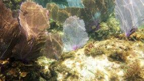 Ventile o coral imagens de stock royalty free