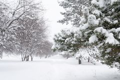 Ventisca de la región de Jabárovsk en el parque de la ciudad de Komsomolsk Foto de archivo libre de regalías