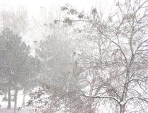 Ventisca y árboles fotos de archivo