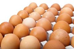 Ventitre uova su priorità bassa bianca Immagini Stock