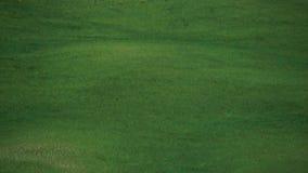 Vento che muove l'erba delle colline di Chianti, Siena archivi video