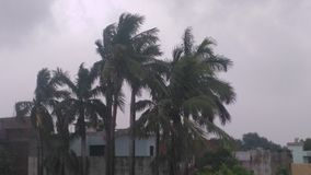 vento con gli alberi, bello albero, piante fotografia stock libera da diritti