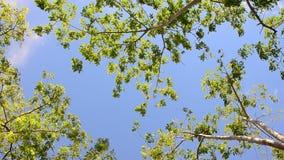 Vento da árvore da natureza video estoque