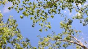 Vento da árvore da natureza vídeos de arquivo