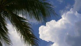 Vento del cielo del sole della palma di Miami Beach che soffia 4k Florida S.U.A. archivi video