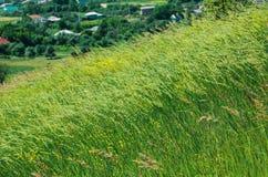 Vento del prato verde di estate. ambiti di provenienza rurali della natura Fotografia Stock Libera da Diritti