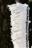 Vento di congelamento Immagini Stock