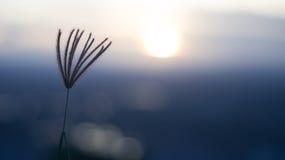 Vento di tramonto Immagine Stock