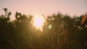 Vento do dia ensolarado que funde na grama da duna na costa Florida Imagem de Stock