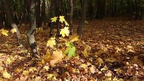Vento dorato in foresta video d archivio