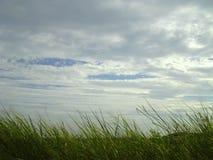 Vento e cielo dell'erba Fotografia Stock Libera da Diritti
