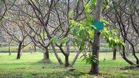 Vento e pássaro da árvore da natureza no parque público em Nonthaburi Tailândia vídeos de arquivo