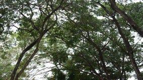 Vento e pássaro da árvore da natureza no parque público em Nonthaburi Tailândia video estoque