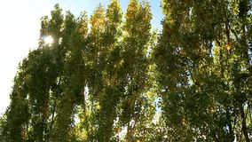 Vento negli alberi archivi video