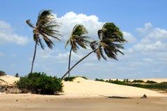Vento nelle palme Fotografia Stock