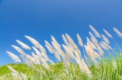 Vento que funde através da grama da flor fotos de stock royalty free