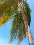 Vento que joga em Palm Beach Foto de Stock