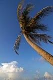 vento saltato della palma Immagini Stock Libere da Diritti