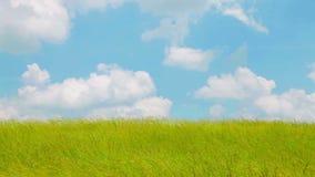 Vento sopra il campo di erba archivi video