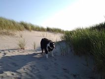 Vento ventoso dell'oceano fotografia stock