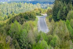 Ventos da estrada através de montes folheados na floresta nativa imagens de stock