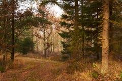 Ventos da estrada de floresta entre as árvores na floresta Fotografia de Stock Royalty Free