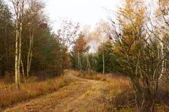 Ventos da estrada de floresta entre as árvores na floresta Imagens de Stock Royalty Free