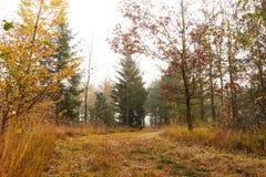Ventos da estrada de floresta entre as árvores na floresta Foto de Stock