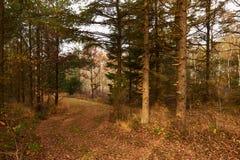 Ventos da estrada de floresta entre as árvores na floresta na queda Imagem de Stock