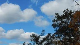 Ventoso, nubes, sol en las hojas anaranjadas y amarillas del árbol almacen de video