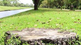 Ventoso a través de hierba y de árboles de ocsilación con el tocón en la ciudad parquee el paisaje almacen de video