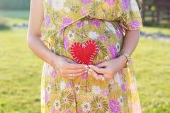 Ventre de symbole de femme enceinte et de coeur dehors Photos stock