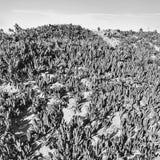 Ventura California-Strandküstenwasser-Sandanlagen stockfoto
