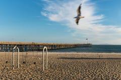 Ventura Pier con il photobomb del gabbiano Fotografie Stock Libere da Diritti
