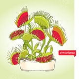 Venus Flytrap or Dionaea muscipula in the round flowerpot on the light green background. Illustrated series of carnivorous plants. Stock Images