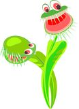 Venus flytrap Royalty Free Stock Photography